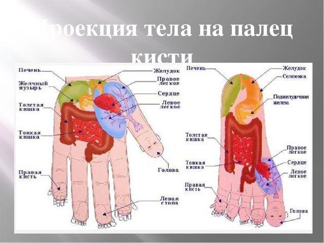 Проекция тела на палец кисти