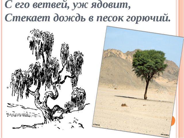 С его ветвей, уж ядовит, Стекает дождь в песок горючий.