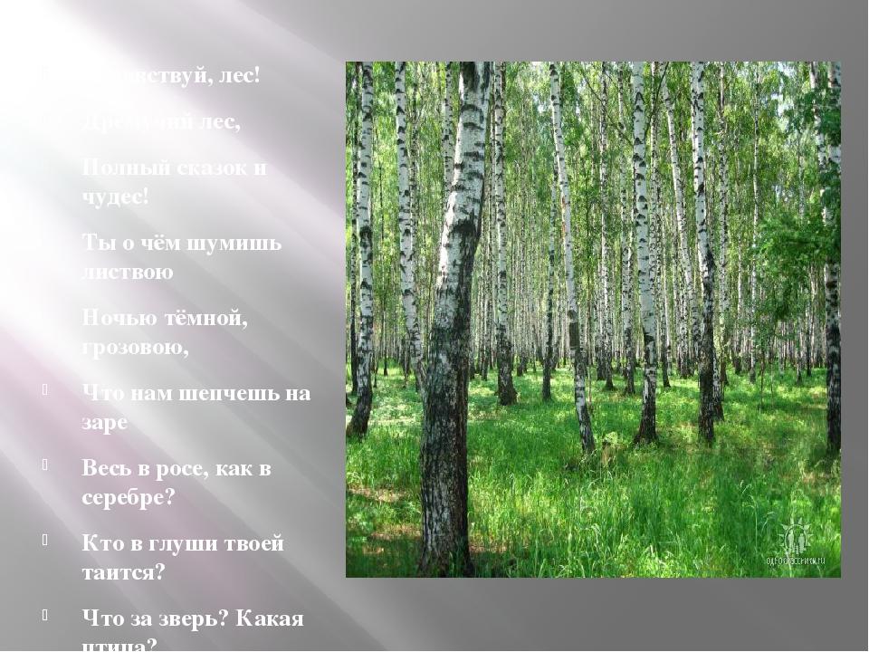 Здравствуй, лес! Дремучий лес, Полный сказок и чудес! Ты о чём шумишь листво...