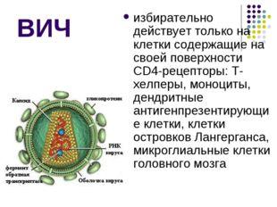 ВИЧ избирательно действует только на клетки содержащие на своей поверхности C