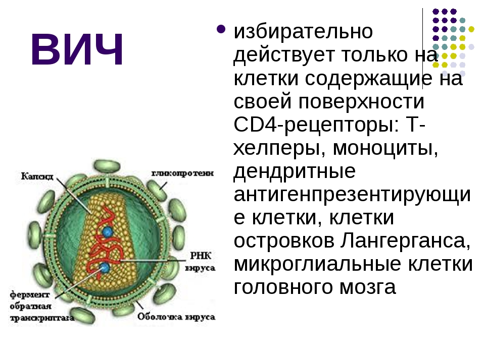 ВИЧ избирательно действует только на клетки содержащие на своей поверхности C...