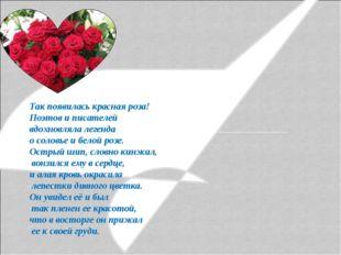 Так появилась красная роза! Поэтов и писателей вдохновляла легенда о соловье