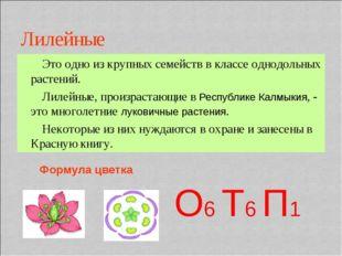 Лилейные Это одно из крупных семейств в классе однодольных растений. Лилейные