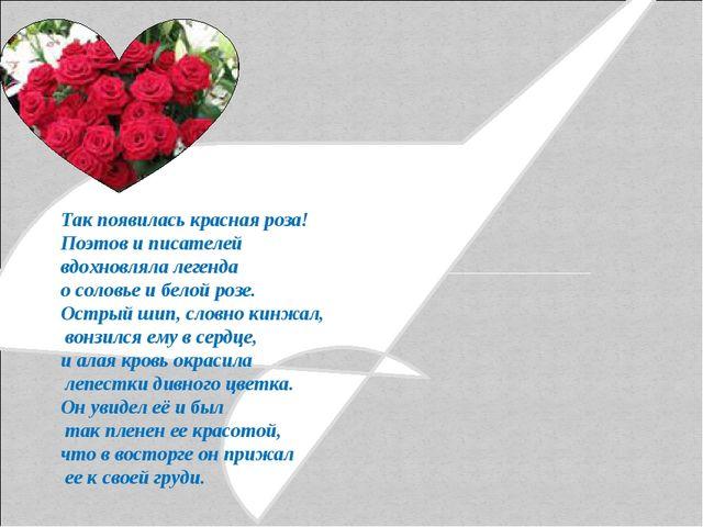 Так появилась красная роза! Поэтов и писателей вдохновляла легенда о соловье...