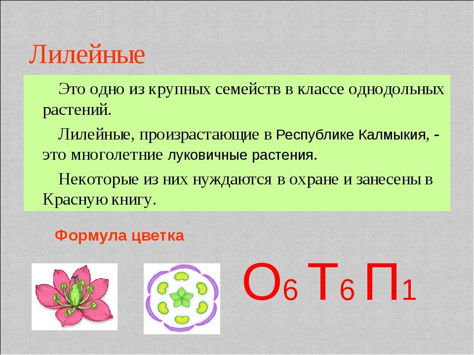 Лилейные Это одно из крупных семейств в классе однодольных растений. Лилейные...