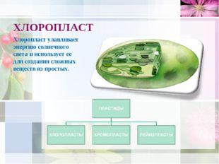 ХЛОРОПЛАСТ Хлоропласт улавливает энергию солнечного света и использует ее для
