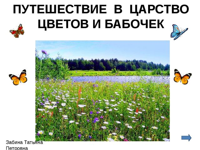 ПУТЕШЕСТВИЕ В ЦАРСТВО ЦВЕТОВ И БАБОЧЕК Забина Татьяна Петровна