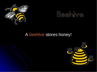A beehive stores honey!