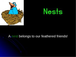 A nest belongs to our feathered friends!