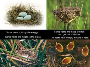 Some nests hold light blue eggs. All nests have hungry mouths to feed. Some n