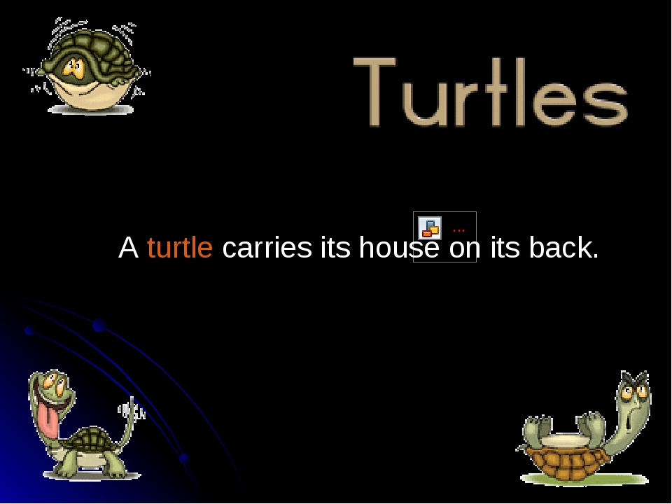 A turtle carries its house on its back.