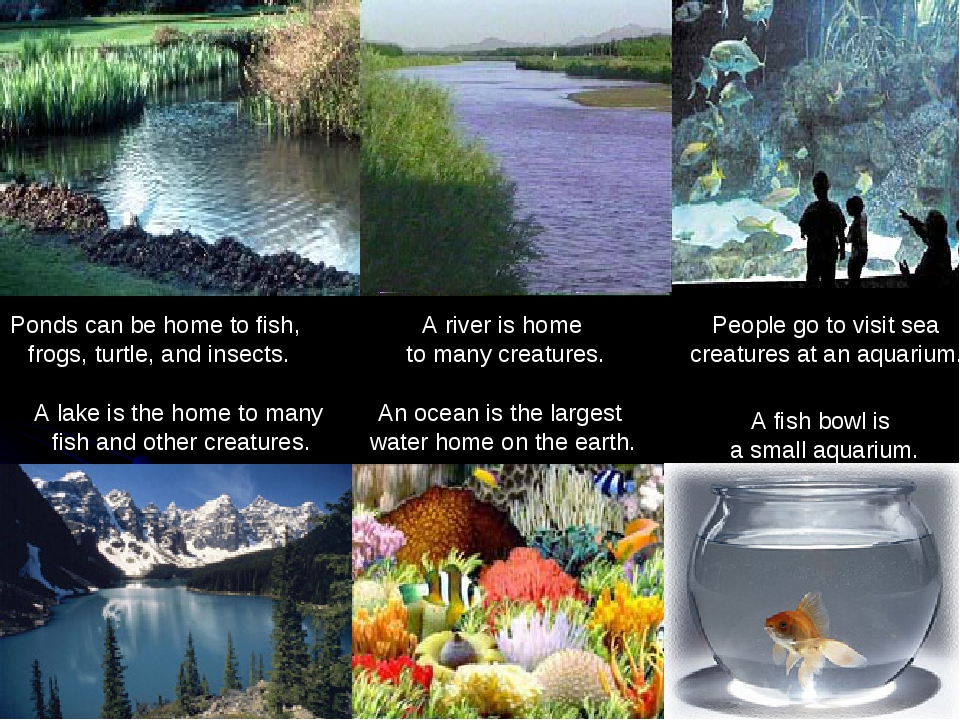 A fish bowl is a small aquarium. An ocean is the largest water home on the ea...