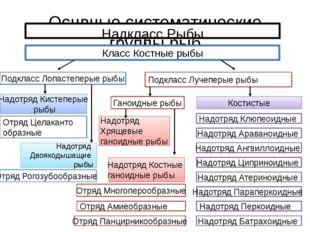Оснвные систематические группы рыб Надкласс Рыбы Класс Костные рыбы Подкласс