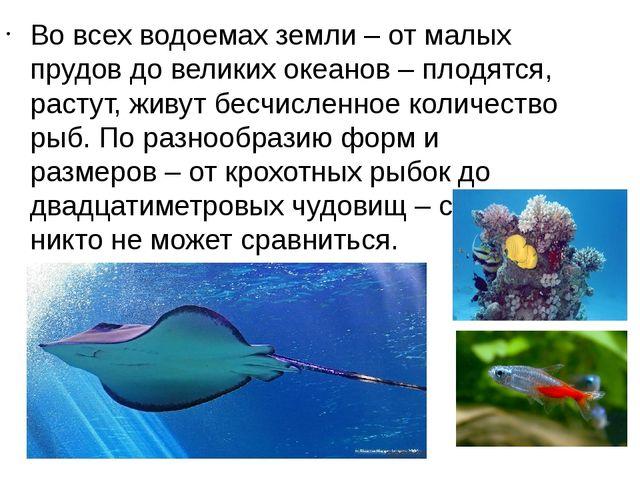 Во всех водоемах земли – от малых прудов до великих океанов – плодятся, расту...