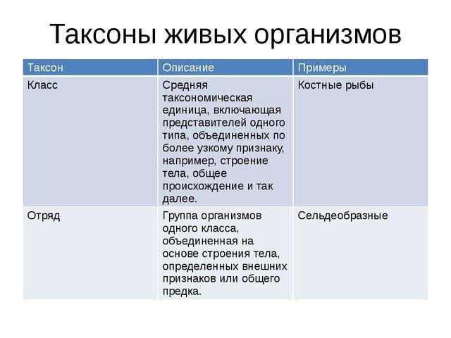 Таксоны живых организмов Таксон Описание Примеры Класс Средняя таксономическа...