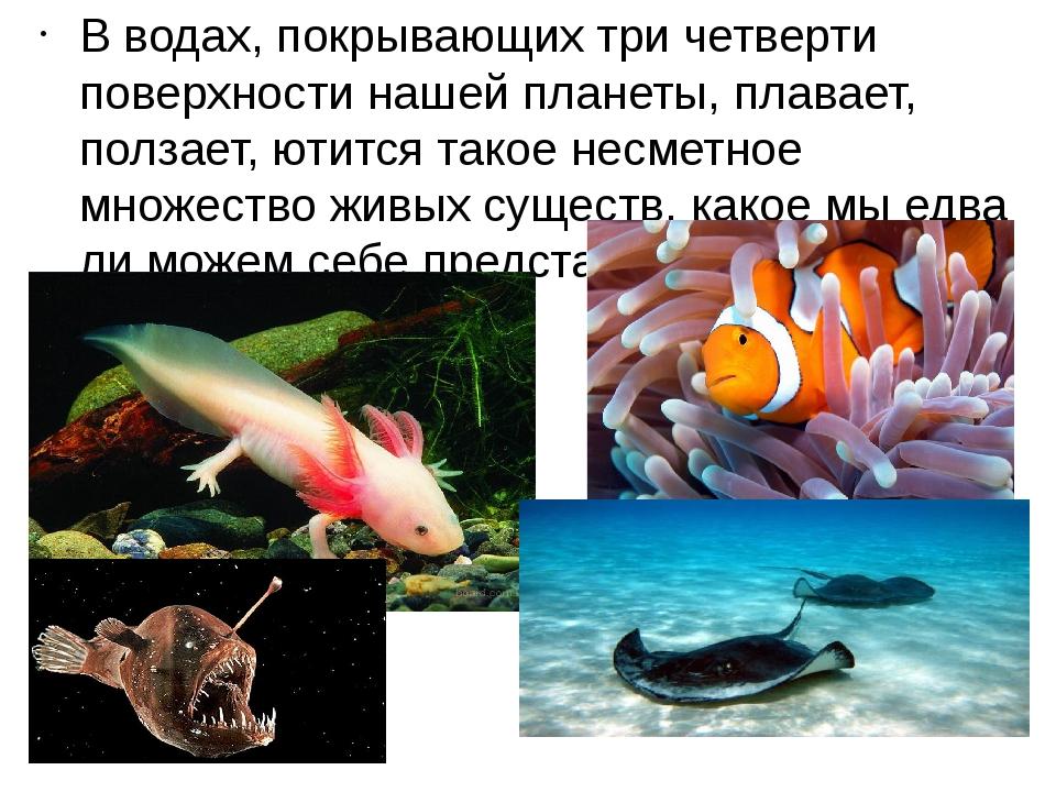 В водах, покрывающих три четверти поверхности нашей планеты, плавает, ползает...