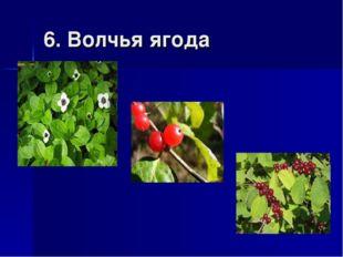6. Волчья ягода