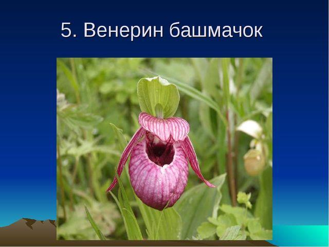 5. Венерин башмачок
