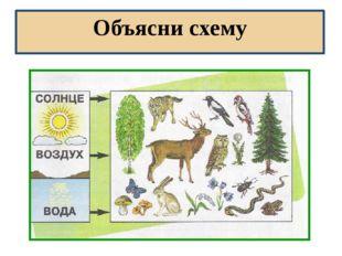 Объясни схему