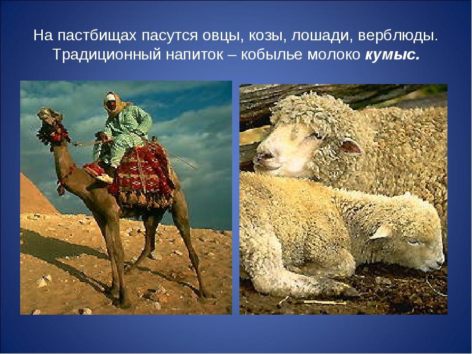На пастбищах пасутся овцы, козы, лошади, верблюды. Традиционный напиток – коб...