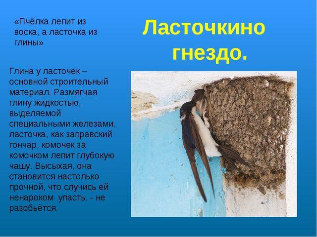 «Пчёлка лепит из воска, а ласточка из глины» Глина у ласточек – основной стро...