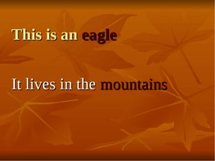 This is an eagle It lives in the mountains