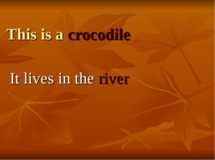 This is a crocodile It lives in the river