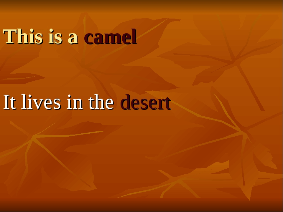 This is a camel It lives in the desert
