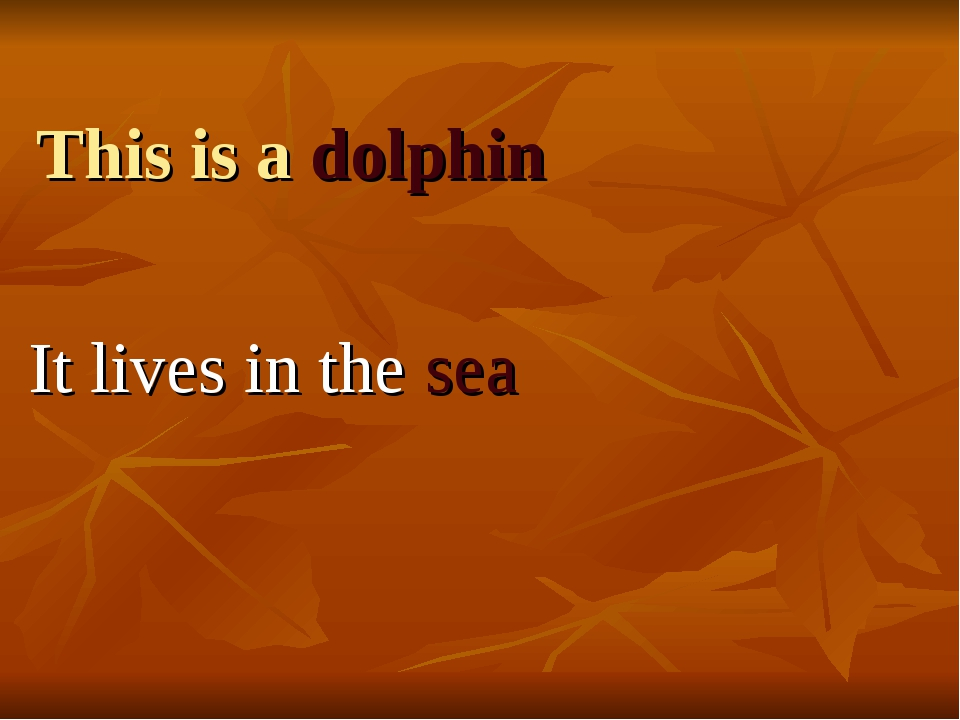 This is a dolphin It lives in the sea