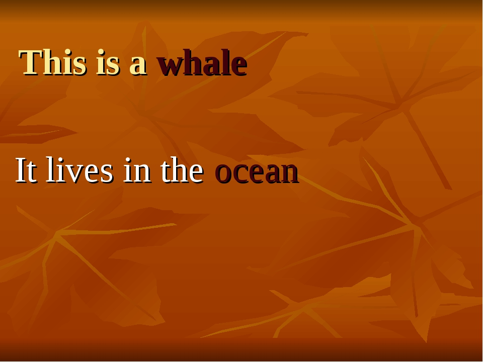 This is a whale It lives in the ocean
