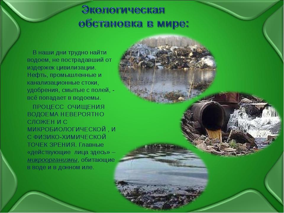 В наши дни трудно найти водоем, не пострадавший от издержек цивилизации. Неф...