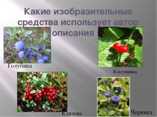 Какие изобразительные средства использует автор для описания ягод? Клюква Гол