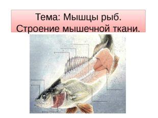 Тема: Мышцы рыб. Строение мышечной ткани.