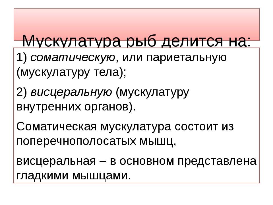 Мускулатура рыб делится на: 1) соматическую, или париетальную (мускулатуру т...