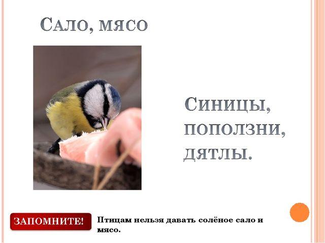 Птицам нельзя давать солёное сало и мясо.