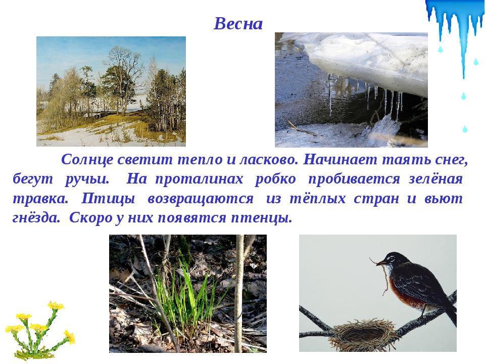 Весна Солнце светит тепло и ласково. Начинает таять снег, бегут ручьи. На пр...