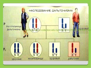 http://files.school-collection.edu.ru/dlrstore/4647f287-25f9-4d51-9200-81181b