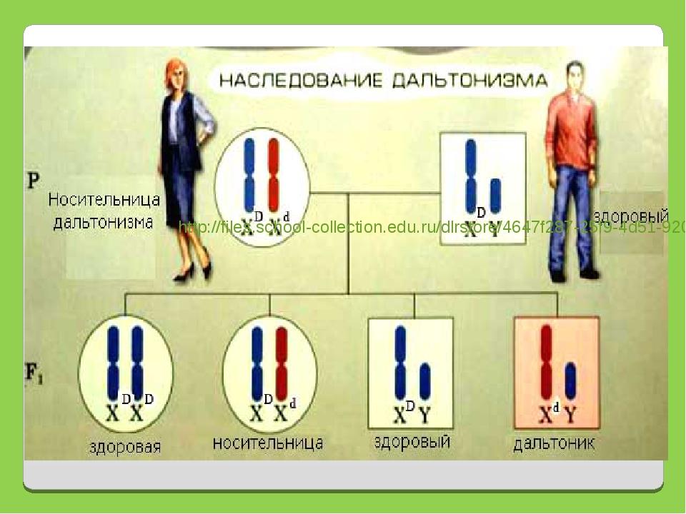 http://files.school-collection.edu.ru/dlrstore/4647f287-25f9-4d51-9200-81181b...