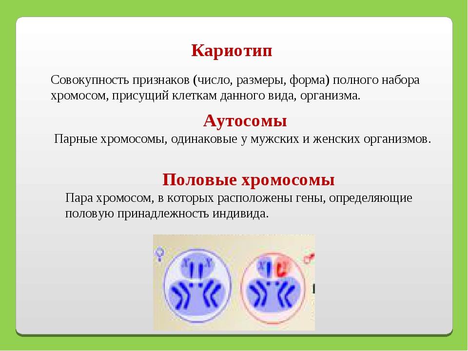 Кариотип Совокупность признаков (число, размеры, форма) полного набора хромос...
