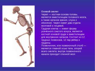 Осевой скелет Череп — костная основа головы, является вместилищем головного м