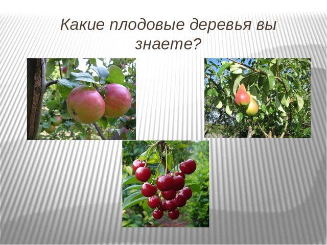 Какие плодовые деревья вы знаете?