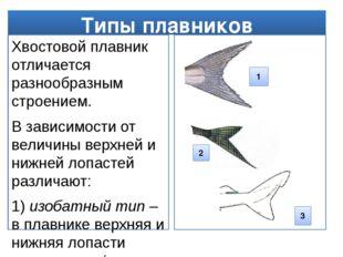 Типы плавников Хвостовой плавник отличается разнообразным строением. В зависи