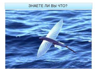 ЗНАЕТЕ ЛИ ВЫ ЧТО? Спасаясь от хищника, летучая рыба после разгона на хвосте р