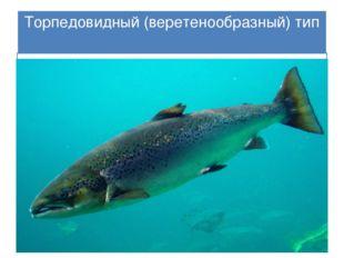 Торпедовидный(веретенообразный) тип Тело рыб похоже на торпеду или веретено,