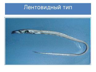 Лентовидный тип Тело, подобное ленте, вытянуто вдоль, плоское с боков. Пловцы
