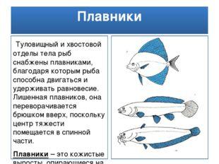 Плавники Туловищный и хвостовой отделы тела рыб снабжены плавниками, благодар