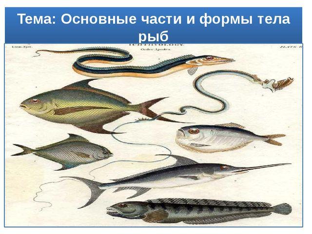 Тема: Основные части и формы тела рыб