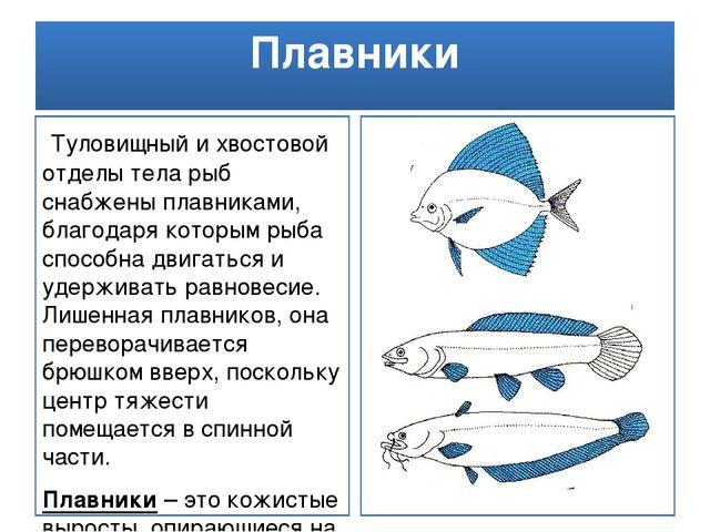 Плавники Туловищный и хвостовой отделы тела рыб снабжены плавниками, благодар...