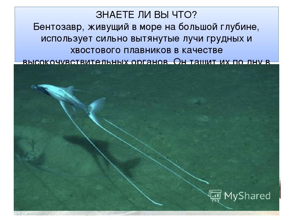 ЗНАЕТЕ ЛИ ВЫ ЧТО? Бентозавр, живущий в море на большой глубине, использует си...