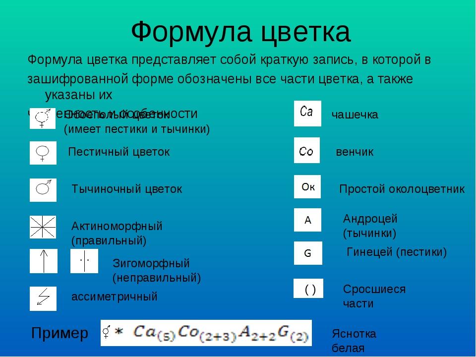Формула цветка Формула цветка представляет собой краткую запись, в которой в...
